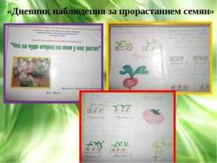 , «Дневник наблюдения за прорастанием семян»