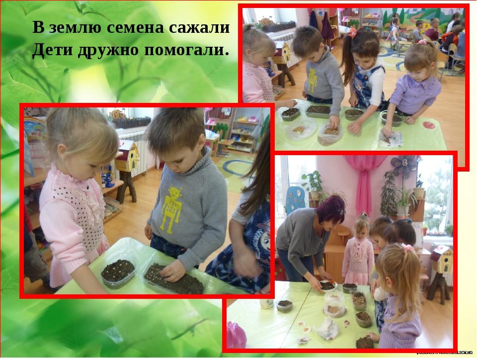 В землю семена сажали Дети дружно помогали.