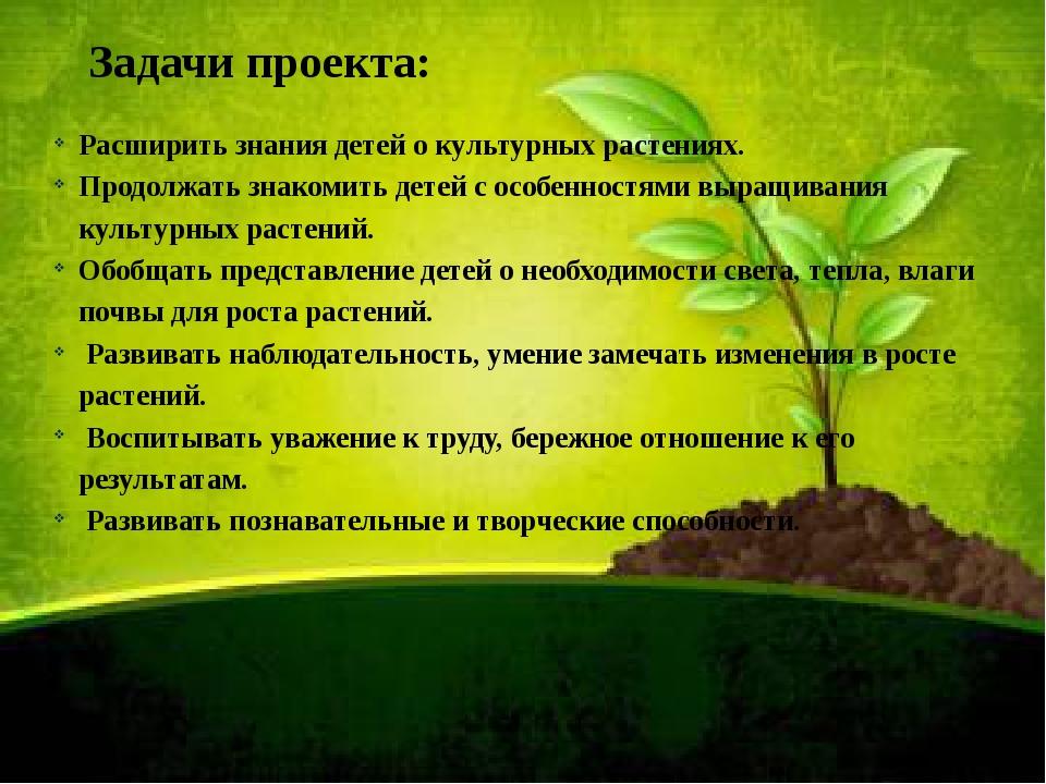Задачи проекта: Расширить знания детей о культурных растениях. Продолжать зна...