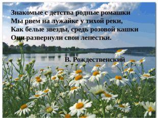 Знакомые с детства родные ромашки Мы рвем на лужайке у тихой реки, Как белые