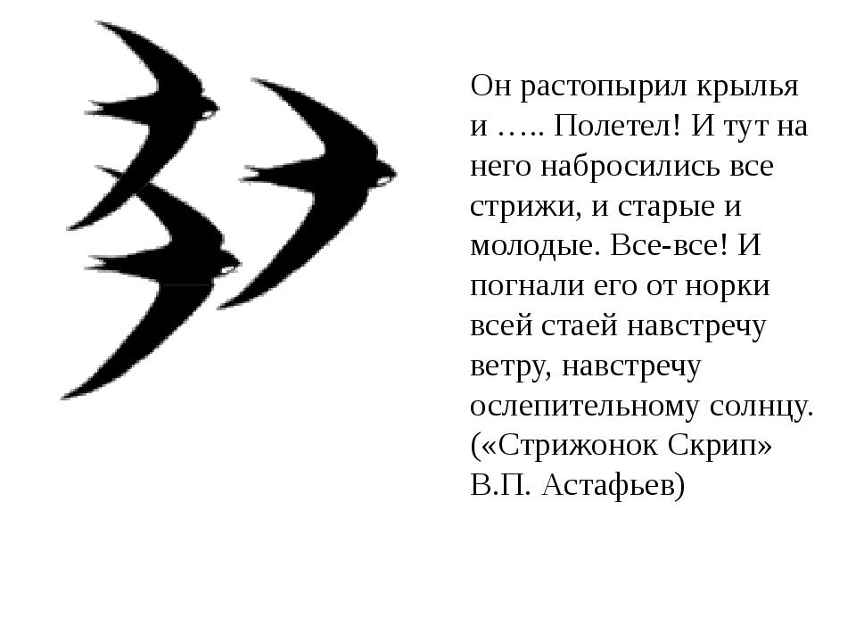 Он растопырил крылья и ….. Полетел! И тут на него набросились все стрижи, и с...