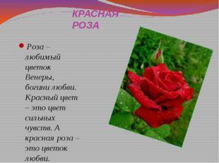 КРАСНАЯ РОЗА Роза – любимый цветок Венеры, богини любви. Красный цвет – это ц