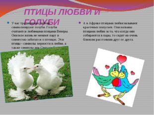 ПТИЦЫ ЛЮБВИ И ГОЛУБИ У нас традиционно любовь символизируют голуби. Голуби сч
