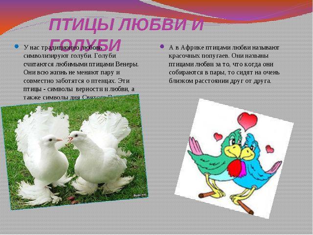 ПТИЦЫ ЛЮБВИ И ГОЛУБИ У нас традиционно любовь символизируют голуби. Голуби сч...