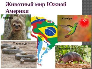 Животный мир Южной Америки Броненосец Анаконда Колибри Ленивец