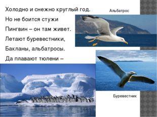 Холодно и снежно круглый год. Но не боится стужи Пингвин – он там живет. Лета