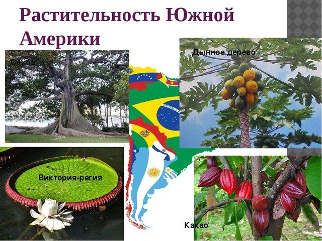 Растительность Южной Америки Виктория-регия Какао Сейба Дынное дерево