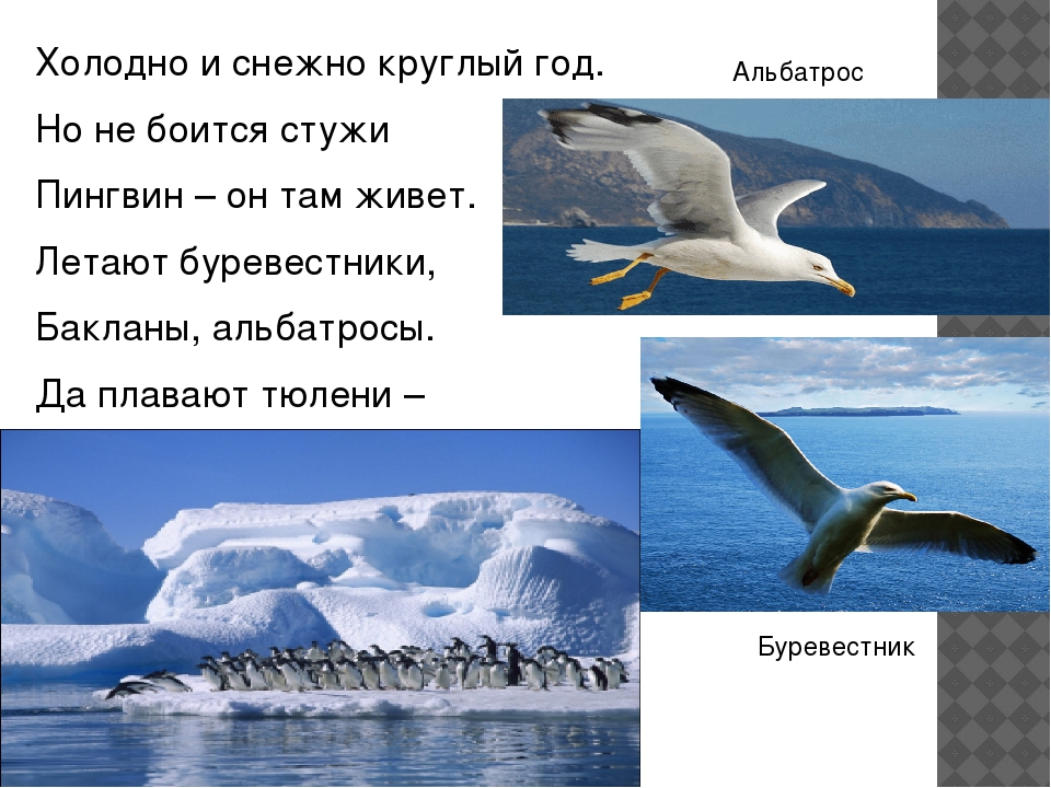 Холодно и снежно круглый год. Но не боится стужи Пингвин – он там живет. Лета...