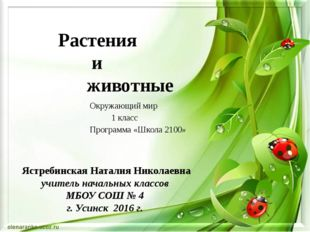 Растения и животные Ястребинская Наталия Николаевна учитель начальных классов
