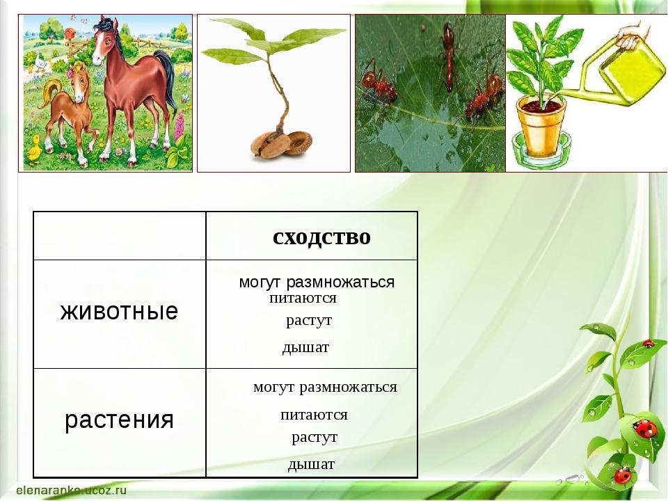 могут размножаться могут размножаться питаются питаются растут растут дышат д...