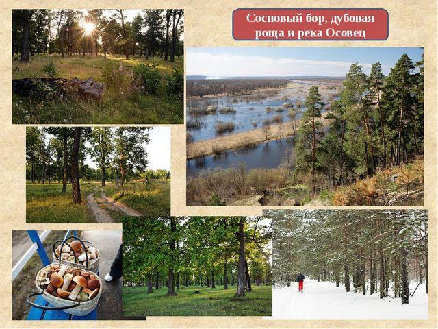 Сосновый бор, дубовая роща и река Осовец