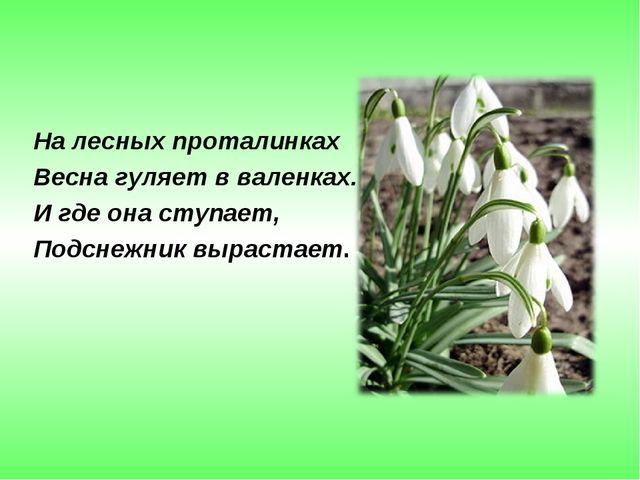 На лесных проталинках Весна гуляет в валенках. И где она ступает, Подснежник...