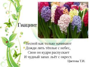 Гиацинт Весной как только начинают Дожди лить тёплые с небес, Свои он кудри р