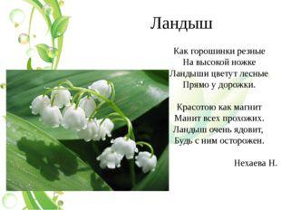 Ландыш Как горошинки резные На высокой ножке Ландыши цветут лесные Прямо у до