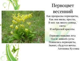 Первоцвет весенний Как прекрасны первоцветы, Как они милы, просты, В них так