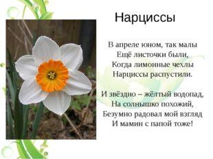 Нарциссы В апреле юном, так малы Ещё листочки были, Когда лимонные чехлы Нарц