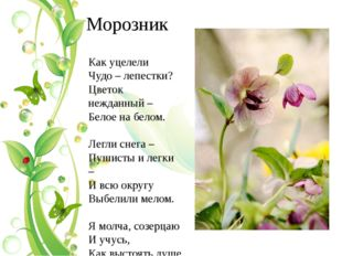 Морозник Как уцелели Чудо – лепестки? Цветок нежданный – Белое на белом. Легл