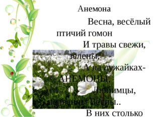 Анемона          Весна, весёлый птичий гомон