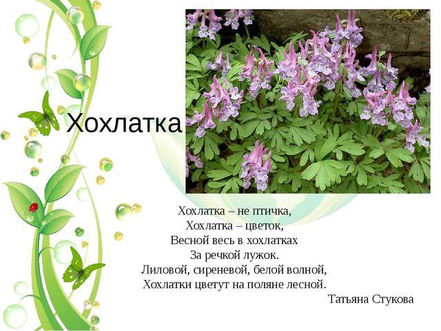 Хохлатка Хохлатка – не птичка, Хохлатка – цветок, Весной весь в хохлатках За...