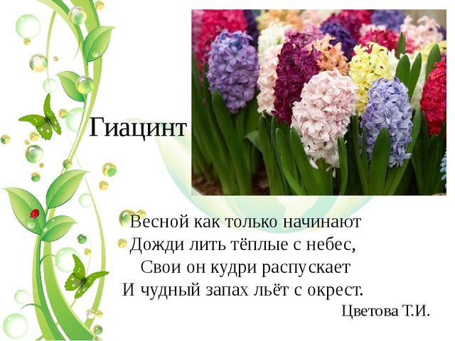 Гиацинт Весной как только начинают Дожди лить тёплые с небес, Свои он кудри р...
