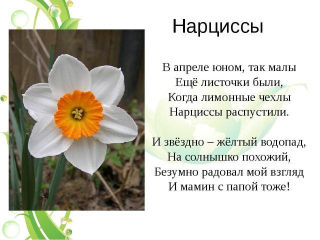 Нарциссы В апреле юном, так малы Ещё листочки были, Когда лимонные чехлы Нарц...