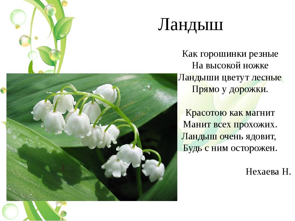 Ландыш Как горошинки резные На высокой ножке Ландыши цветут лесные Прямо у до...