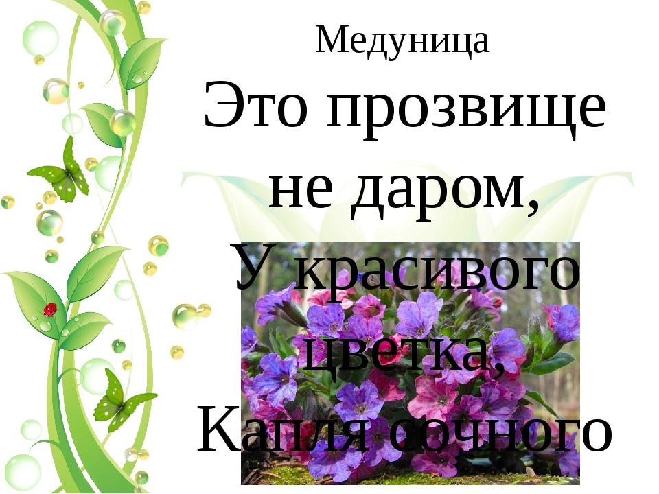 Медуница Это прозвище не даром, У красивого цветка, Капля сочного нектара, И...
