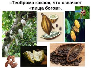 «Теоброма какао», что означает «пища богов».