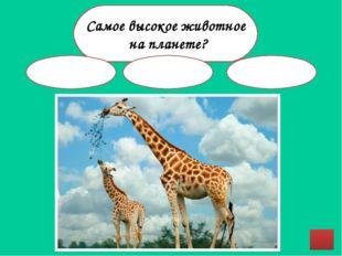 Источники http://www.ebftour.ru/images/import/news/94f11a0e42199617314fec4d91
