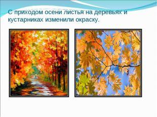 С приходом осени листья на деревьях и кустарниках изменили окраску.