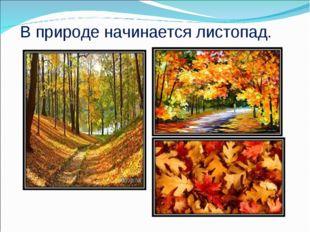 В природе начинается листопад.