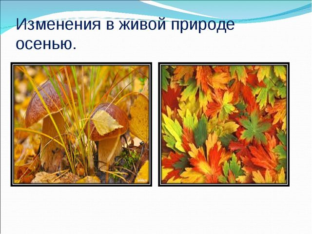 Изменения в живой природе осенью.