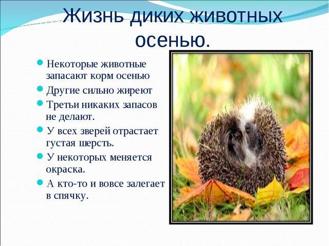 Жизнь диких животных осенью. Некоторые животные запасают корм осенью Другие с...