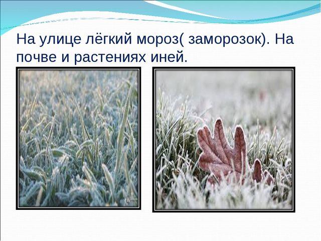 На улице лёгкий мороз( заморозок). На почве и растениях иней.