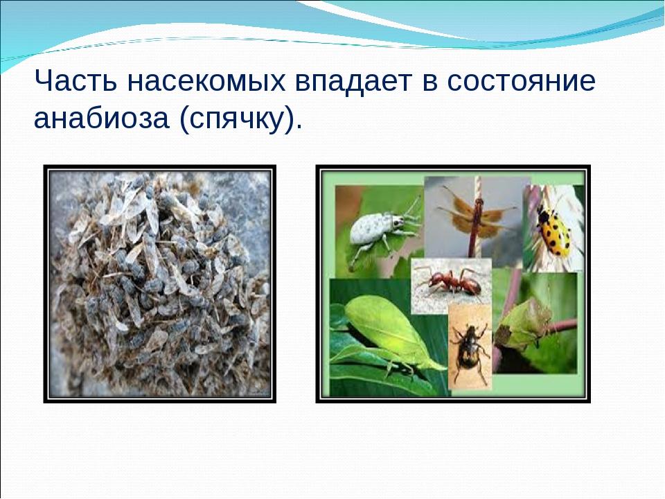 Часть насекомых впадает в состояние анабиоза (спячку).