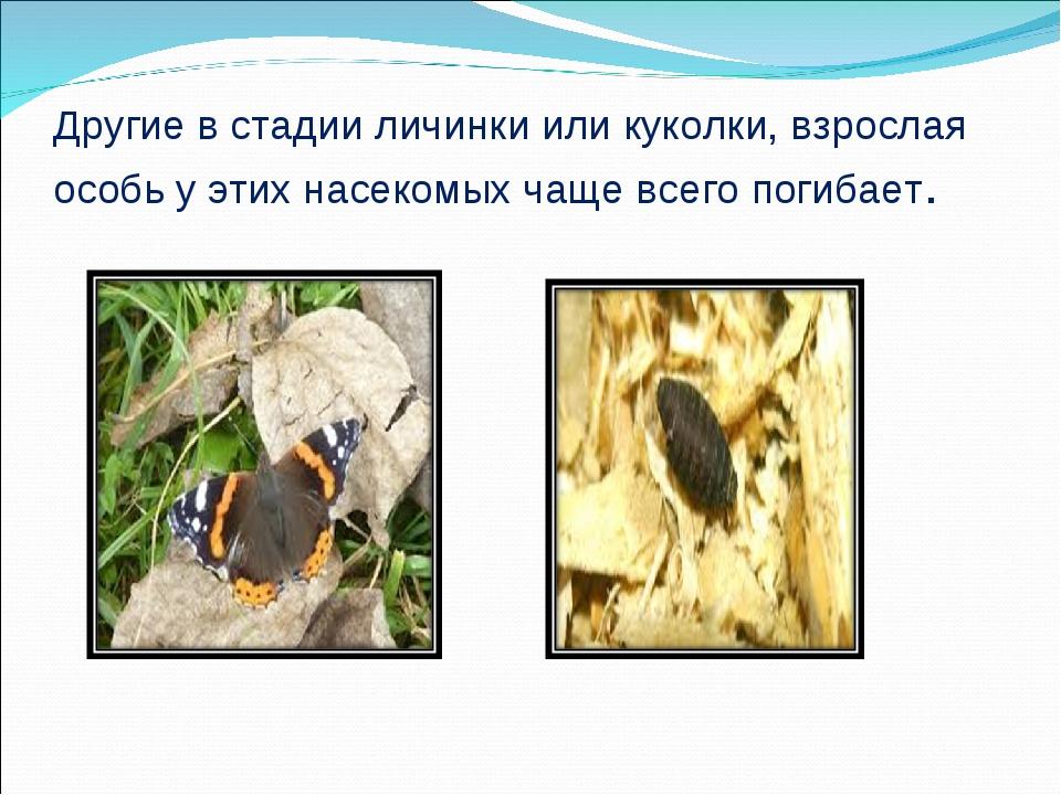 Другие в стадии личинки или куколки, взрослая особь у этих насекомых чаще все...