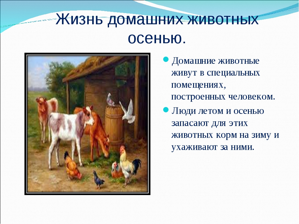 Жизнь домашних животных осенью. Домашние животные живут в специальных помещен...