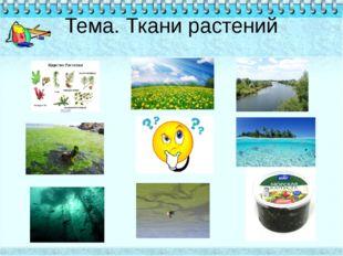 Тема. Ткани растений