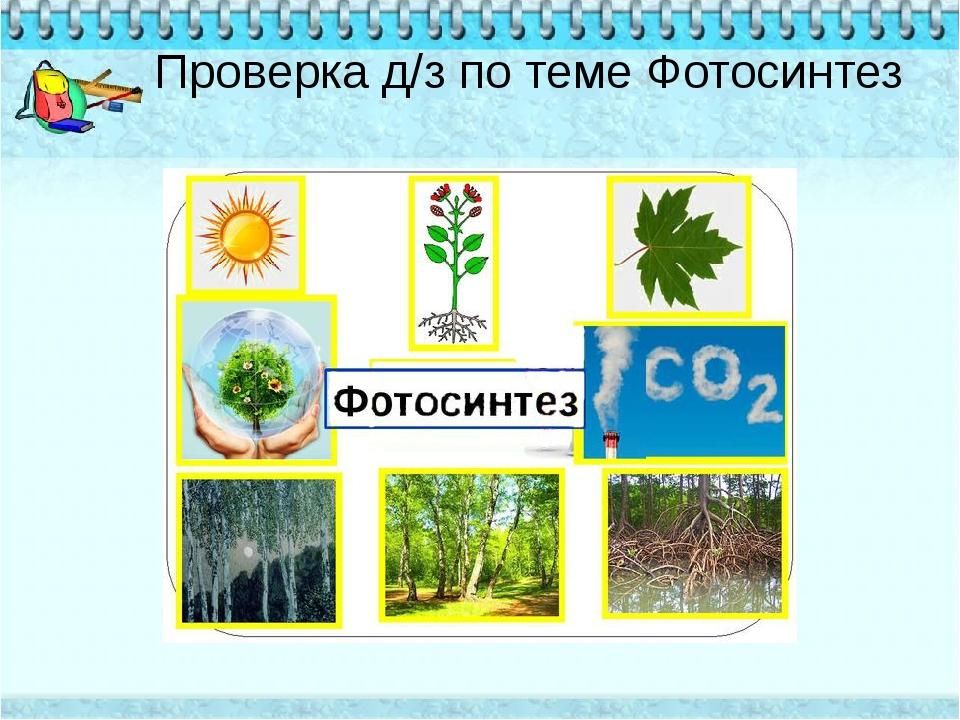 Проверка д/з по теме Фотосинтез