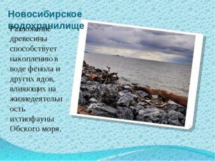 Новосибирское водохранилище Разложение древесины способствует накоплению в во