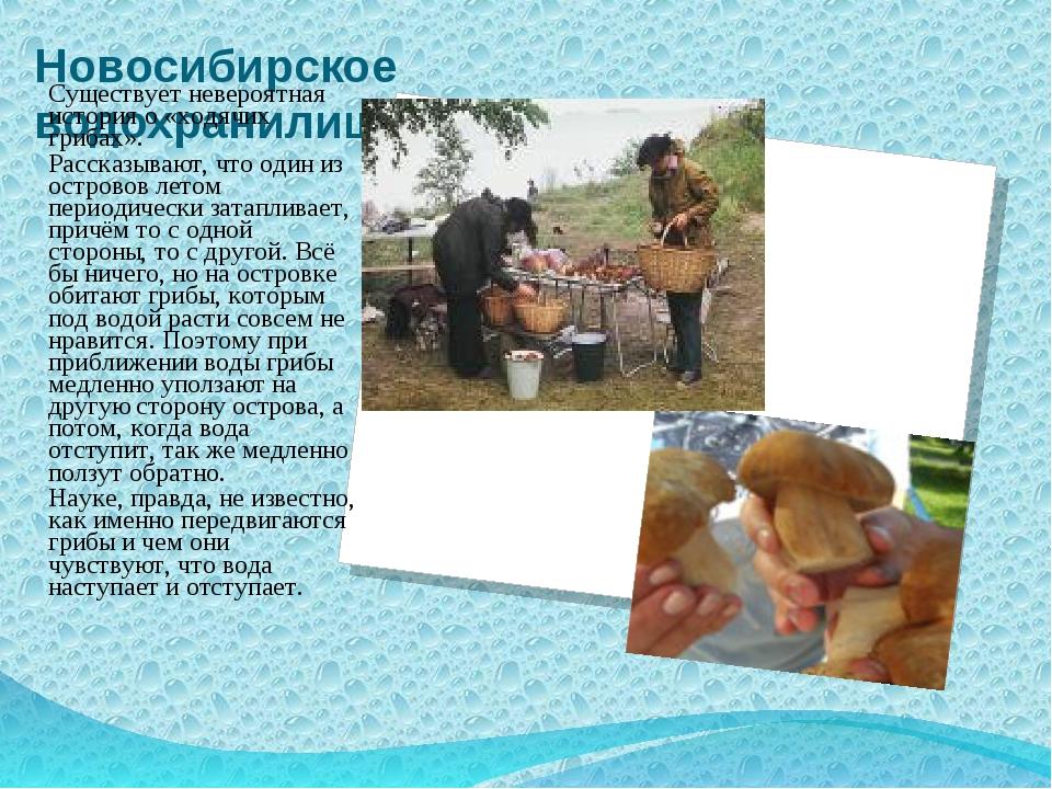 Новосибирское водохранилище Существует невероятная история о «ходячих грибах»...