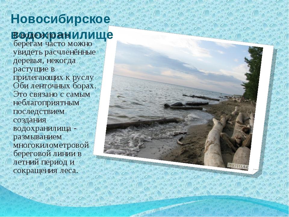 Новосибирское водохранилище В воде и по его берегам часто можно увидеть расчл...