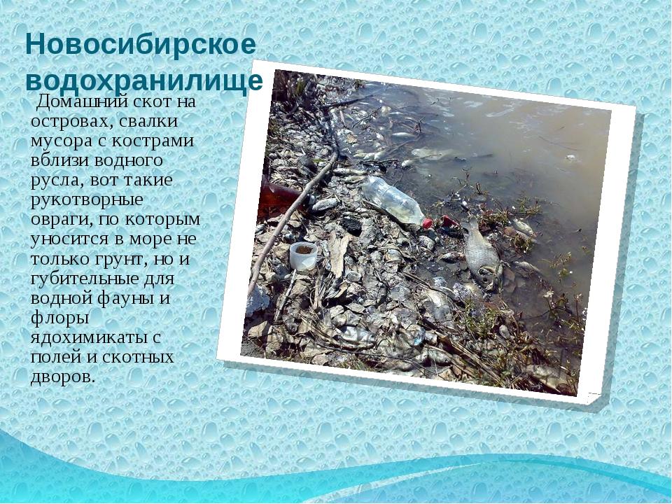Новосибирское водохранилище Домашний скот на островах, свалки мусора с костра...