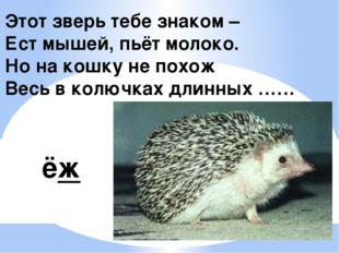 Этот зверь тебе знаком – Ест мышей, пьёт молоко. Но на кошку не похож Весь в