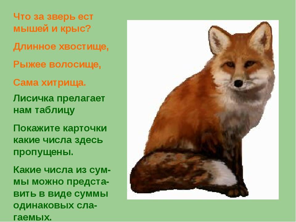 Что за зверь ест мышей и крыс? Длинное хвостище, Рыжее волосище, Сама хитрища...