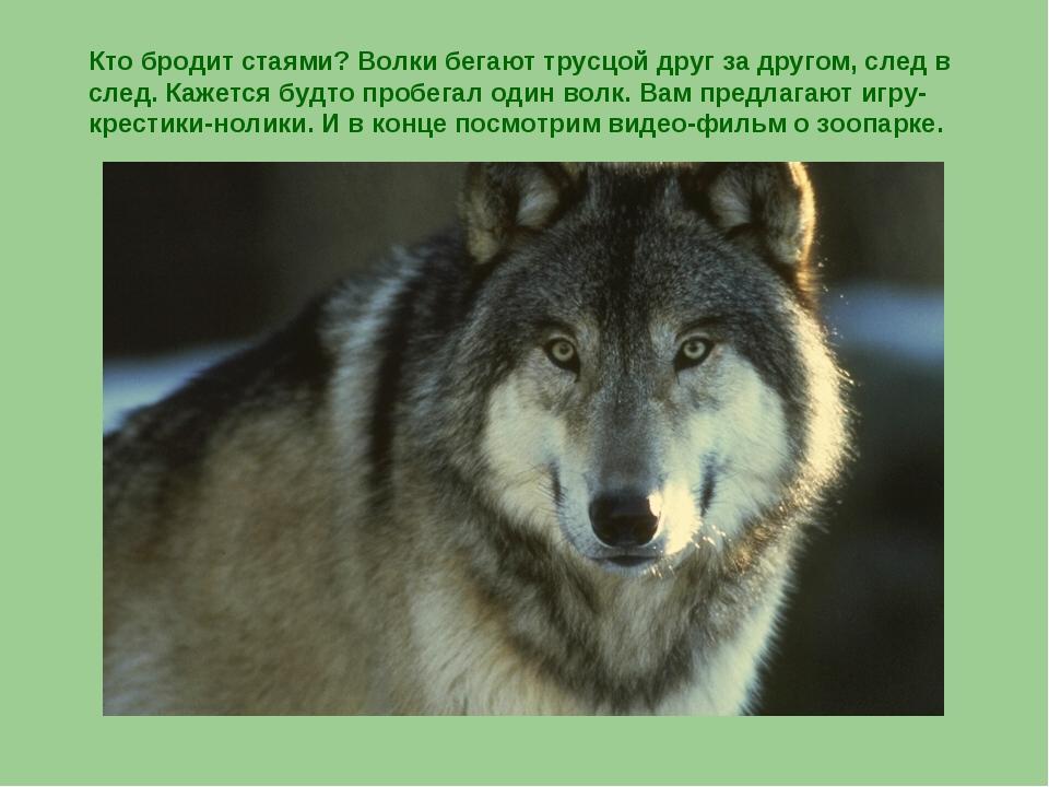 Кто бродит стаями? Волки бегают трусцой друг за другом, след в след. Кажется...