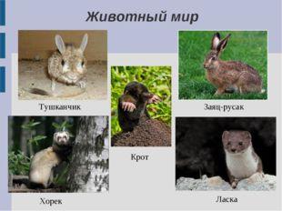 Тушканчик Заяц-русак Хорек Ласка Крот Животный мир