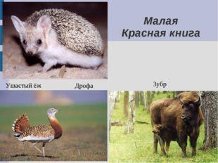 Зубр Дрофа Ушастый ёж Малая Красная книга