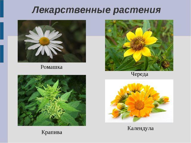 Лекарственные растения Ромашка Череда Крапива Календула
