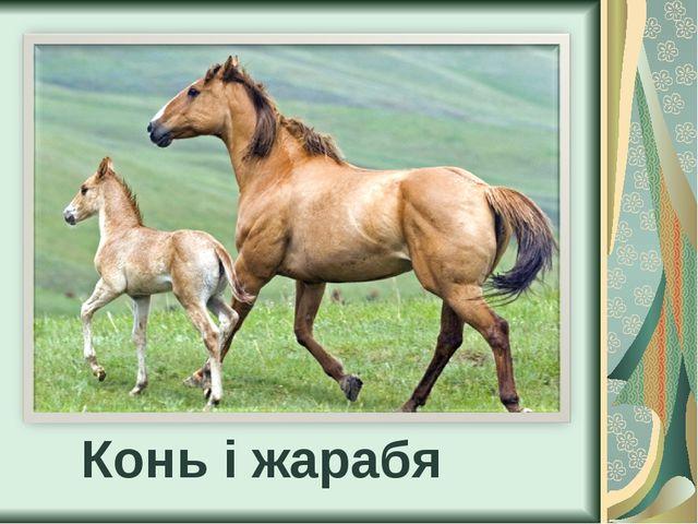 Конь і жарабя